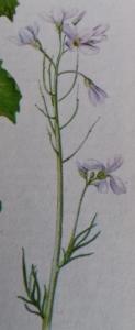 Voorjaarsreinigingskuur-met-de-pinksterbloem