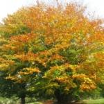 10-tips-bij-een-herfstdip-herfstbladeren